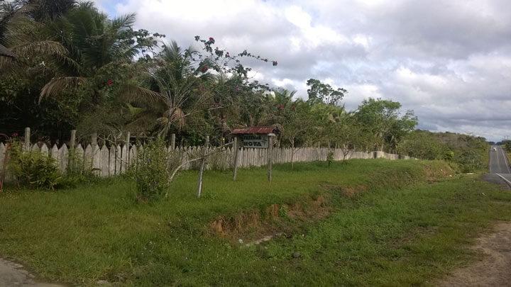Palmen und ein Holzzaun grenzen die Facenda von der Straße Manacapuru - Novo Airao ab