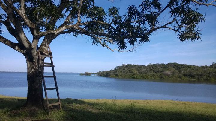 Ein schöner, schattiger Platz unter dem Baum mit Leiter